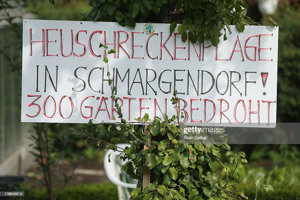 A sign at a garden and cottage at the Oeynhausen Small Garden Association garden colony reads: 'Locust Plague In Schmargendorf! 300 Gardens Threatened!' in reference to real estate developers on August 29, 2013 in Berlin, Germany. At the Oeynhausen colony about 300 of its 438 gardens are currently threatened by real estate development, as are about another 24 colonies across the city. Berlin has about 900 garden colonies that are owned by the city and that provide urban dwellers who don't have land of their own the opportunity to maintain a garden and escape the stress of urban life. Berlin is currently undergoing a housing squeeze and city authorities are beginning to sell some of the colonies to developers, which has caused outrage in a city where the colonies of small gardens are a deep-seated tradition going back over a century.
