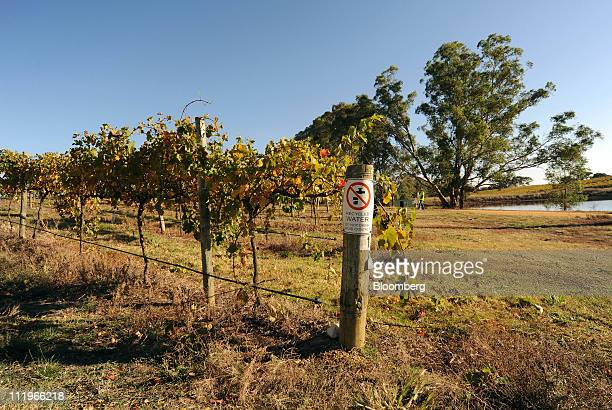 A sign at the end of a row of Shiraz grape vines warns that recycled water is in use at Foster's Group Ltd's Seppelt vineyard in Great Western...