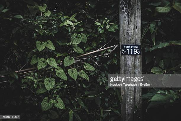 Sign Board On Tree Trunk Against Plants