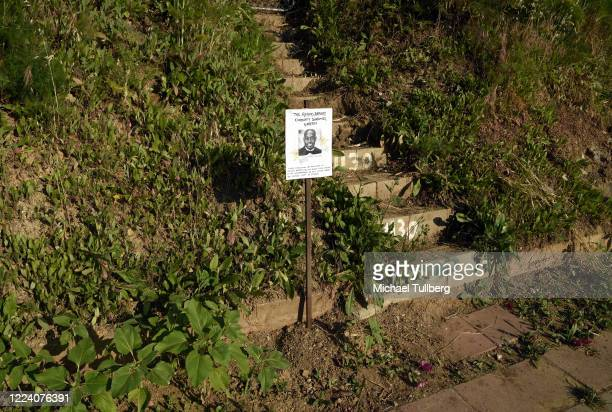 A sign dedicates a sunflower garden to the memory of Ahmaud Arbery at Echo Park during the coronavirus pandemic on May 10 2020 in Los Angeles...