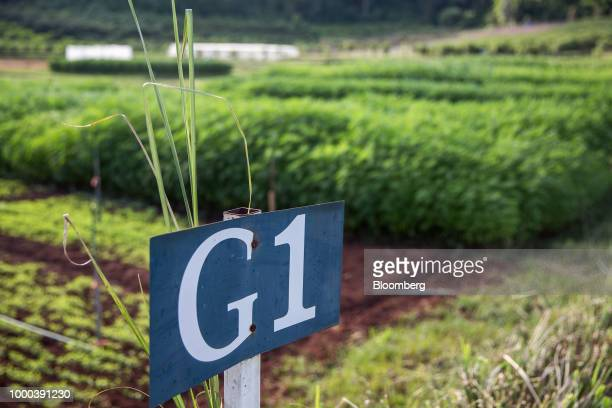 A sign designates an area where hemp plants are grown for medical research purposes at the Royal Agricultural Station Pang Da in Samoeng Chiang Mai...