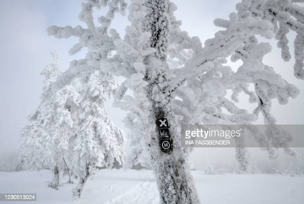 Sign for a trail is seen on a snow-covered tree at the Kahler Asten mountain in Winterberg, western Germany, on January 10 amid the ongoing novel...