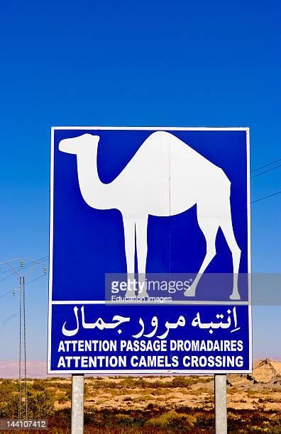 Sign For Camel Crossing In Sahara Desert Near Tozeur Tunisia