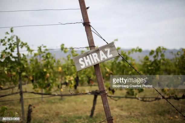 a sign for shiraz grapes - shiraz stock photos and pictures