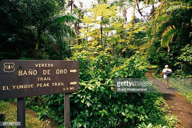 sign in el yunque rainforest - paisajes de puerto rico fotografías e imágenes de stock