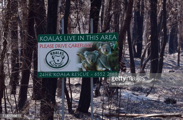 A sign indicating koalas live in the area stands in a burnt out forest near the town of Taree some 350kms north of Sydney on November 14 2019 The...