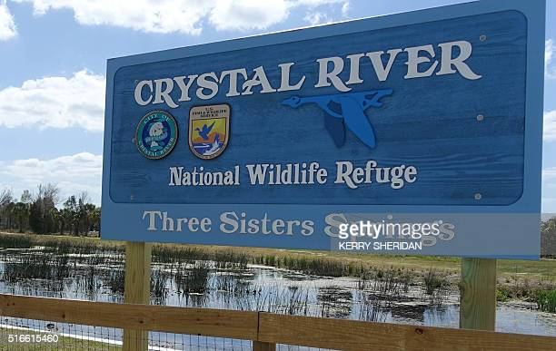 A sign is viewed on March 9 2016 in Crystal River Florida At peak spring break season tourists flock to the warm water springs to swim with manatees...