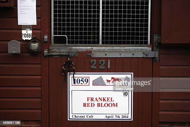 A sign marks the stable where Lot Number 1059 a 7 month old chestnut colt is one of four foals sired by the legendary racehorse Frankel to be going...