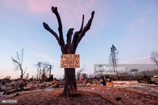 A sign of resilience is seen posted on a tree in a firedestroyed neighborhood of Santa Rosa California on October 20 2017 Residents are being allowed...
