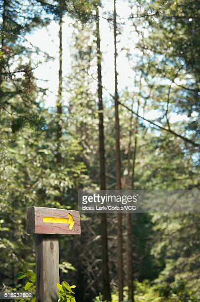 Sign pointing the way in woods