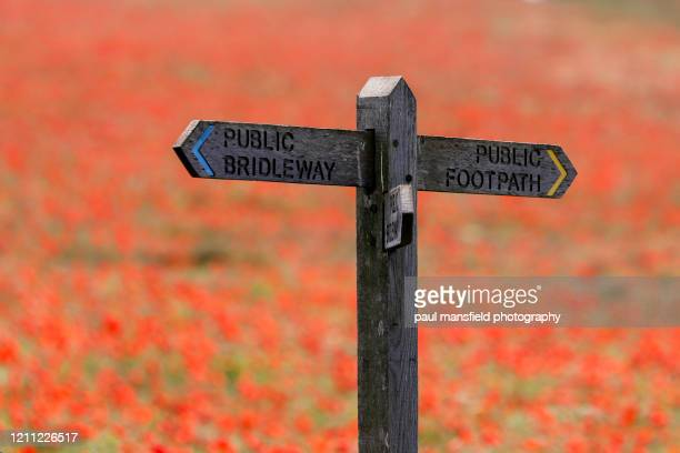 sign post in poppy field - rural scene stock pictures, royalty-free photos & images