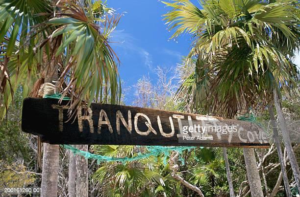 sign post tied to palm trees on beach - ハーバー島 ストックフォトと画像