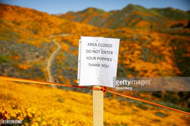 A sign protecting poppy flowers stands on a field during a 'super bloom' in Lake Elsinore California US on Saturday March 16 2019 California is free...