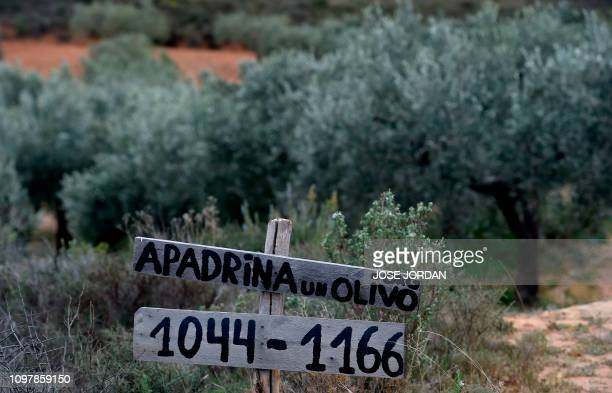 A sign reads Adopt an olive tree in an olive grove in Oliete northeastern Spain on December 17 2018 Residents began moving away from rural towns and...