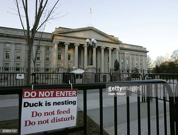 """Sign reads """"Duck is Nesting"""" on a fence where a brown mallard duck sits in front of the Treasury Department April 15, 2005 in Washington, DC. The..."""