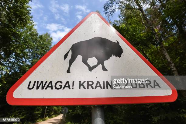 WARNING LAND OF BISON sign seen on August 09 2017 near Bialowieza Poland The Bialowieza National Park is best known for the protection of the...