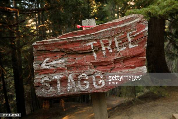 Sign to the 3,000-year-old Stagg Tree, the fifth-largest giant sequoia on record which is as tall as a 25-story building and wider than a two-lane...