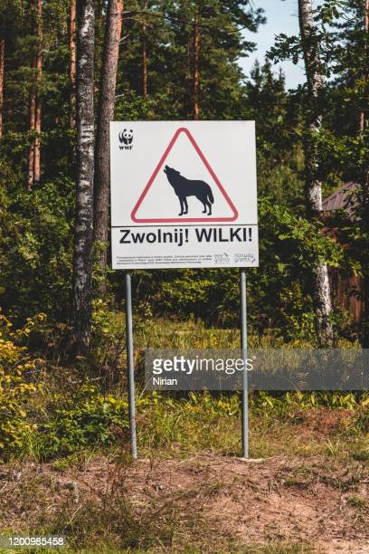 a sign warning of wolf on a road - bialowieza forest imagens e fotografias de stock