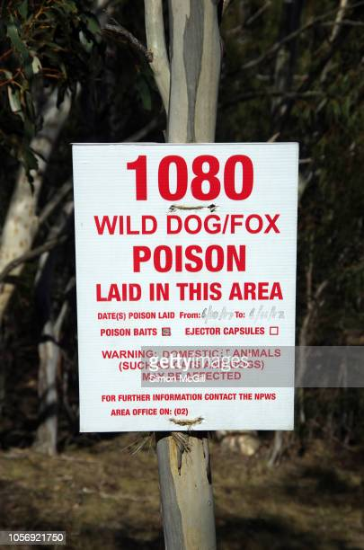 Sign warning that poison baits have been laid to control wild dogs and foxs in Kosciuszko National Park, New South Wales, Australia