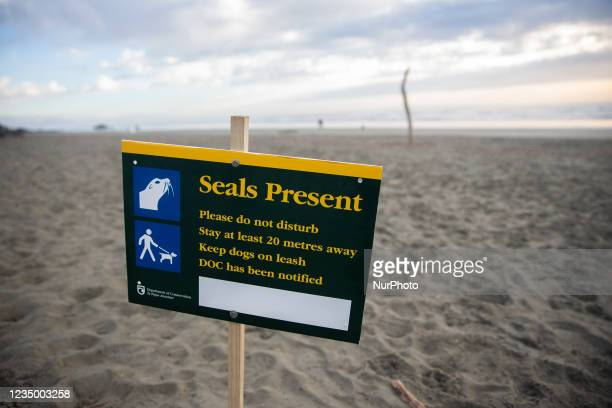 Sign warning visitors of the presence of seals on Sumner beach in Christchurch, New Zealand on September 02, 2021. Leopard seals are usually found on...
