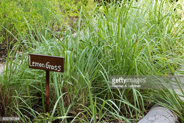 Sign with text 'Lemongrass' & planted lemongrass