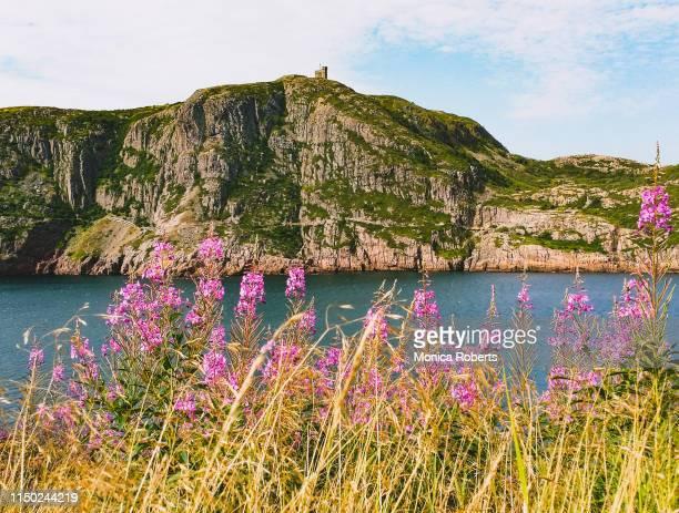 signal hill - paisajes de st johns fotografías e imágenes de stock
