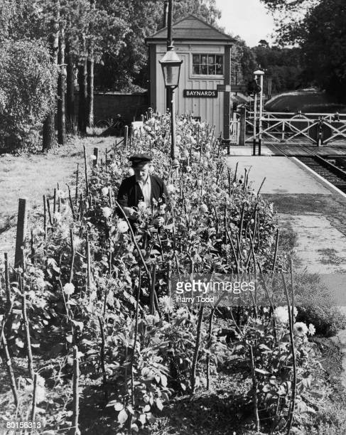 Signalman Geoff Burdfield tends one of the flowerbeds at Baynards railway station on the Cranleigh Line between Guildford and Horsham in Surrey 14th...