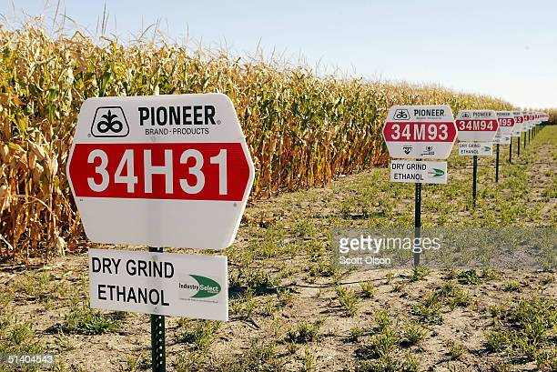 Signs mark the location of various corn hybrids grown for use in ethanol production on a plot of land farmed by Kevin Otte October 4 2004 near...