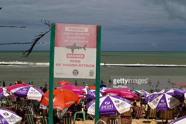 Signs warn beachgoers about shark attacks in the Boa Viagem beach in Recife northeastern Brazil on October 16 2016 The beach is known internationally...