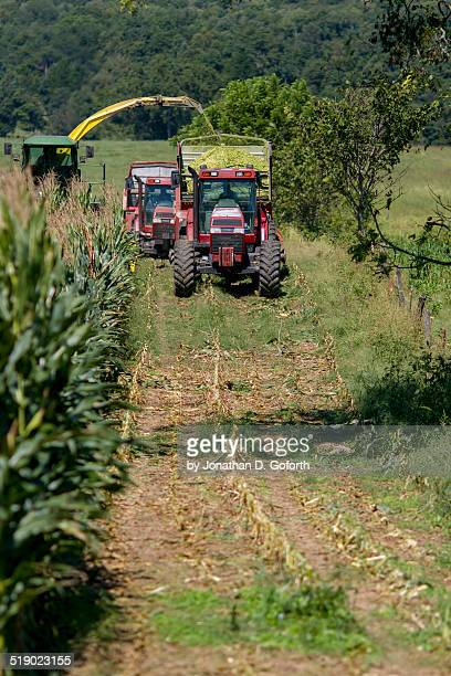 silage chopping - eubank stock photos and pictures