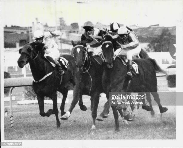 Rosehill Races Race 8 Silastic Gasket HcpWinner Mount Tambo August 3 1985