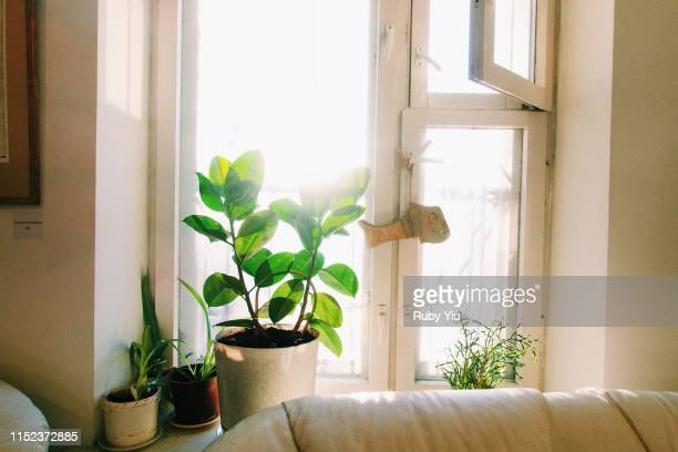 silent and comfortable room with plant and sunlight, russia - 朝 ストックフォトと画像