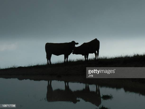 silent love - animal behaviour stock pictures, royalty-free photos & images