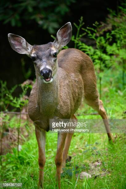 silent moment with a doe - highlywood stock pictures, royalty-free photos & images