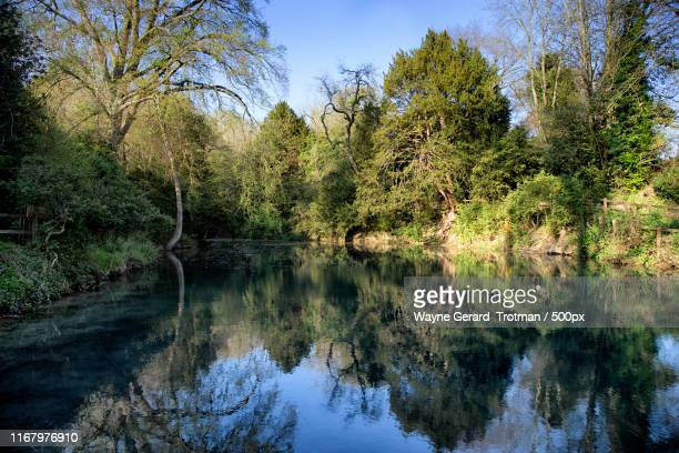 silent pool - wayne gerard trotman stock pictures, royalty-free photos & images
