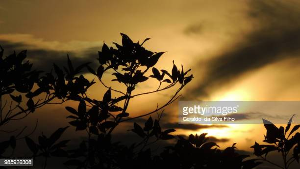 silhouette and sunset - filho stock pictures, royalty-free photos & images