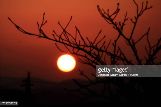silhouette bare tree against orange sky - william moon stock pictures, royalty-free photos & images