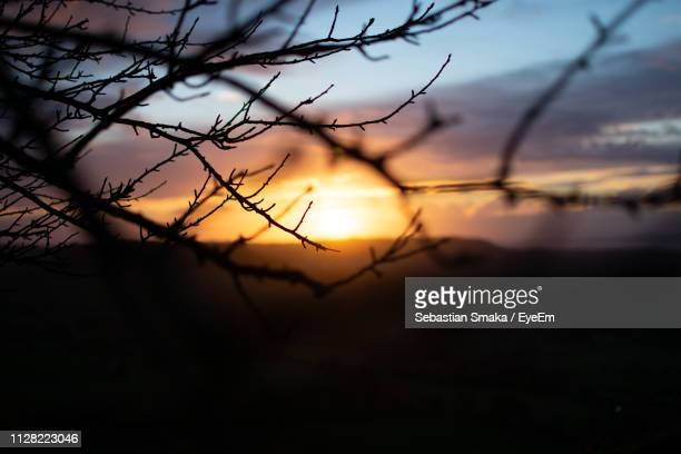 silhouette bare tree against sky during sunset - bare tree stock pictures, royalty-free photos & images
