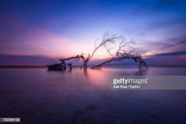 silhouette bare tree by sea against sky at sunset - ade rizal stock photos and pictures