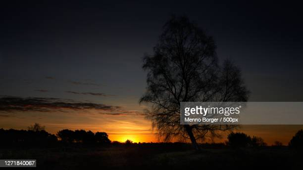 silhouette bare tree on field against sky at sunset, esch, netherlands - zonsopgang stock pictures, royalty-free photos & images