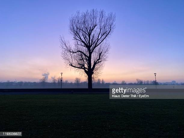silhouette bare tree on field against sky during sunset - klaus-dieter thill stock-fotos und bilder