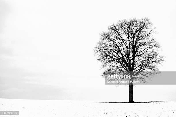 silhouette bare tree on snow covered field against sky - kahler baum stock-fotos und bilder