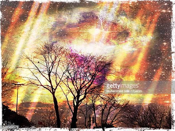 silhouette bare trees against sky at sunset - transferbild stock-fotos und bilder