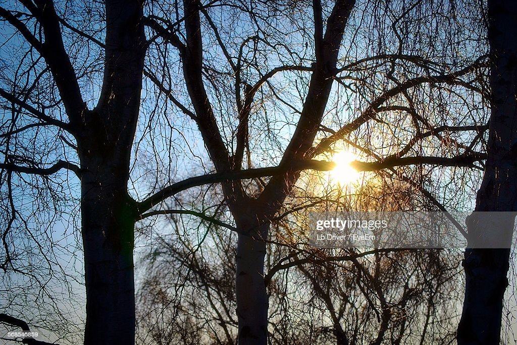 Silhouette Bare Trees Against Sky At Sunset : Stock Photo