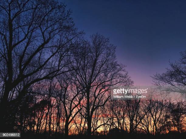 silhouette bare trees against sky at sunset - william moon stock pictures, royalty-free photos & images
