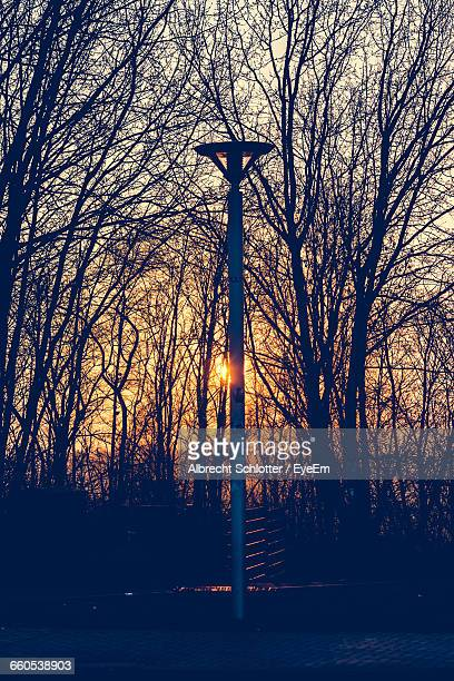 silhouette bare trees and lamppost against sunset - albrecht schlotter stock photos and pictures
