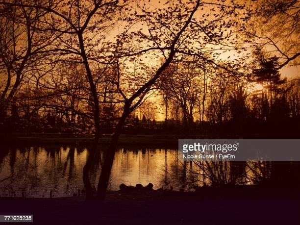 Silhouette Bare Trees By Lake In Forest During Sunset