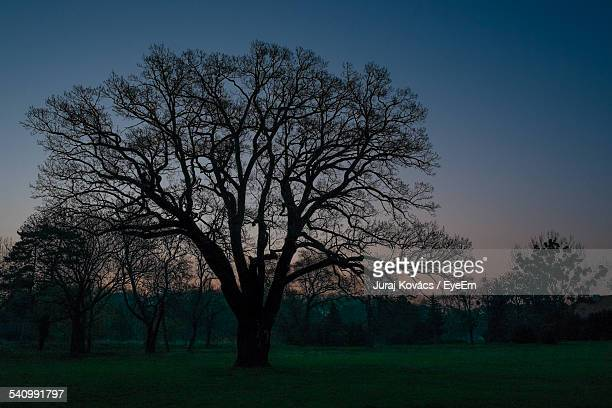 Silhouette Bare Trees On Field Against Clear Sky