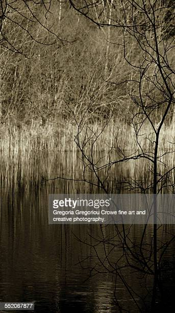 silhouette bare trees - gregoria gregoriou crowe fine art and creative photography stock-fotos und bilder