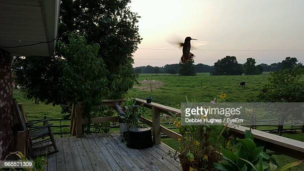 silhouette bird flying above porch - shreveport stock pictures, royalty-free photos & images